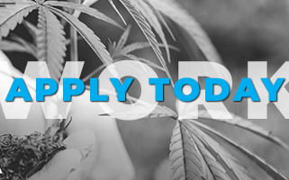 Work in the Cannabis Industry